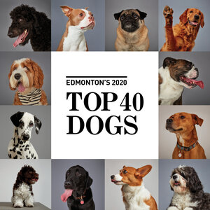 Top 40 Dogs of Edmonton